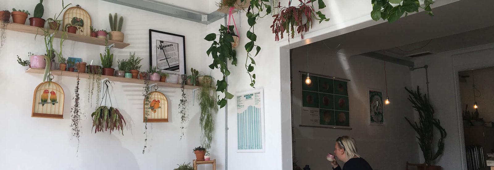 Image of Albatross Café
