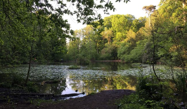 Image of Abbots Pool