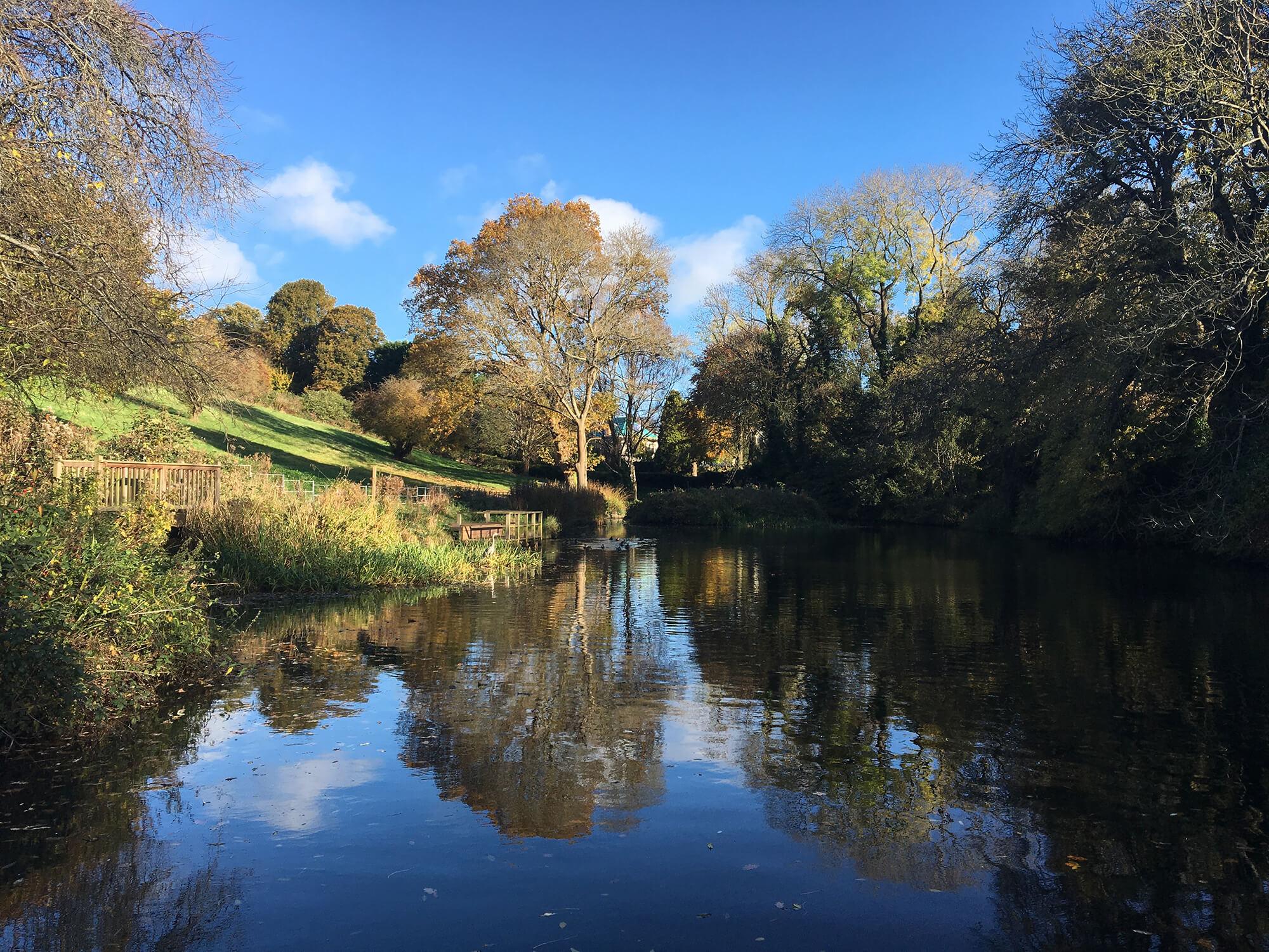 Old Sneed Park Nature Reserve - Bristol Dog Walk