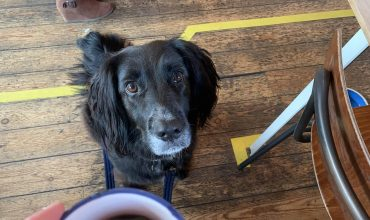 Image of https://bristol-barkers.co.uk/dog-friendly/the-malago/