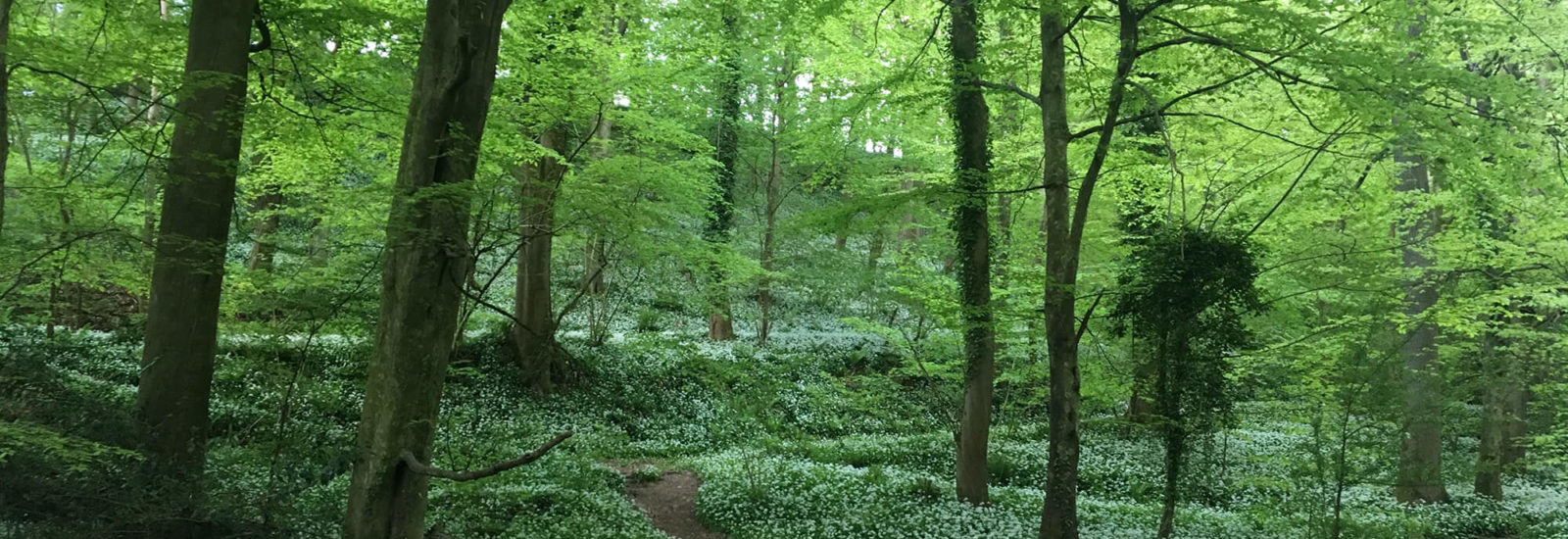 Image of West Tanpit Wood