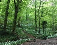 Image for West Tanpit Wood