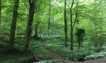Image of https://bristol-barkers.co.uk/walks/west-tanpit-wood/
