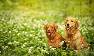 Image of https://bristol-barkers.co.uk/posts/best-bristol-dog-walks-for-wild-garlic/