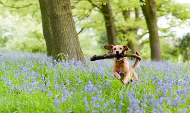 Image of https://bristol-barkers.co.uk/posts/best-places-for-beautiful-bluebells/