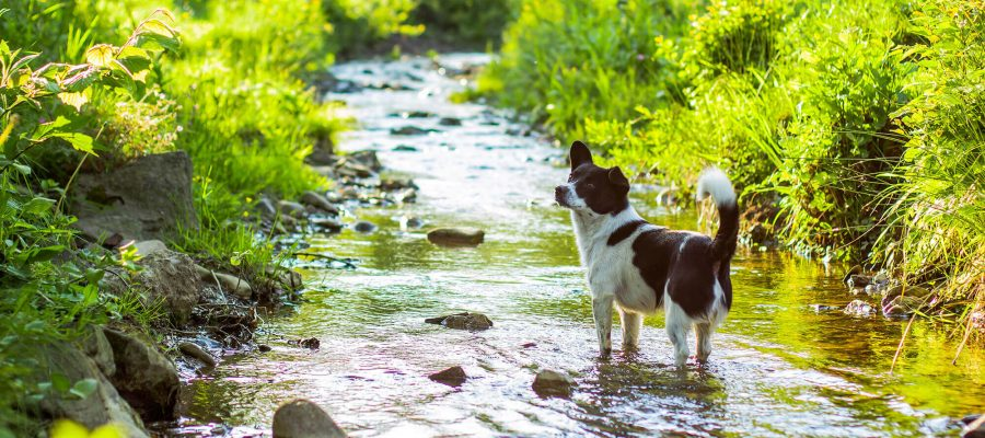 Image of Best places in Bristol for a doggy paddle