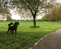 Image for Dundridge Park & Conham Vale