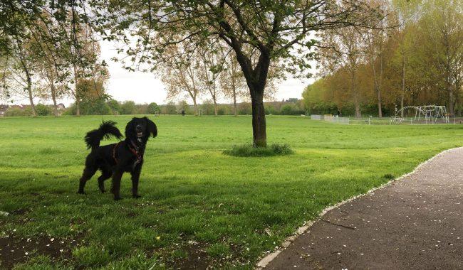 Image of Dundridge Park & Conham Vale