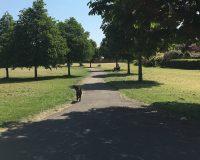 Image for Monks Park