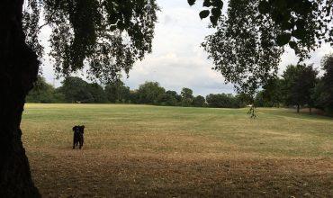 Image of https://bristol-barkers.co.uk/walks/victory-park/