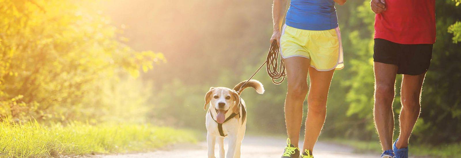 Image of Best places in Bristol to run with your dog