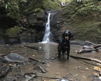 Image for Greyfield Wood & Stephen's Vale Waterfall