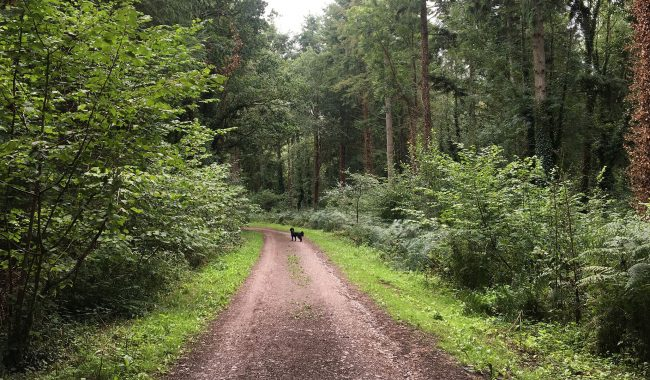 Image of Lord's Wood