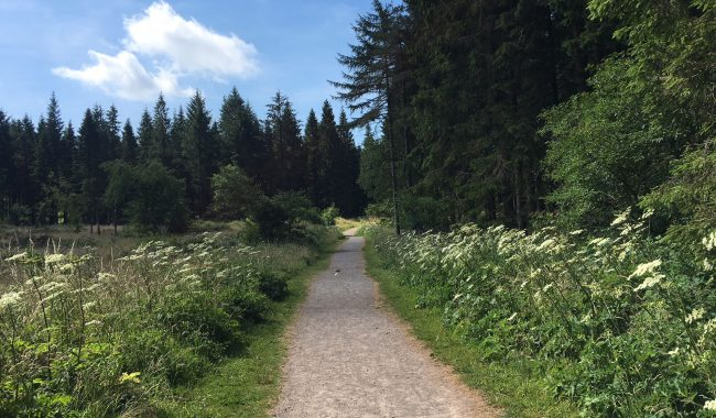 Image of Stockhill Wood