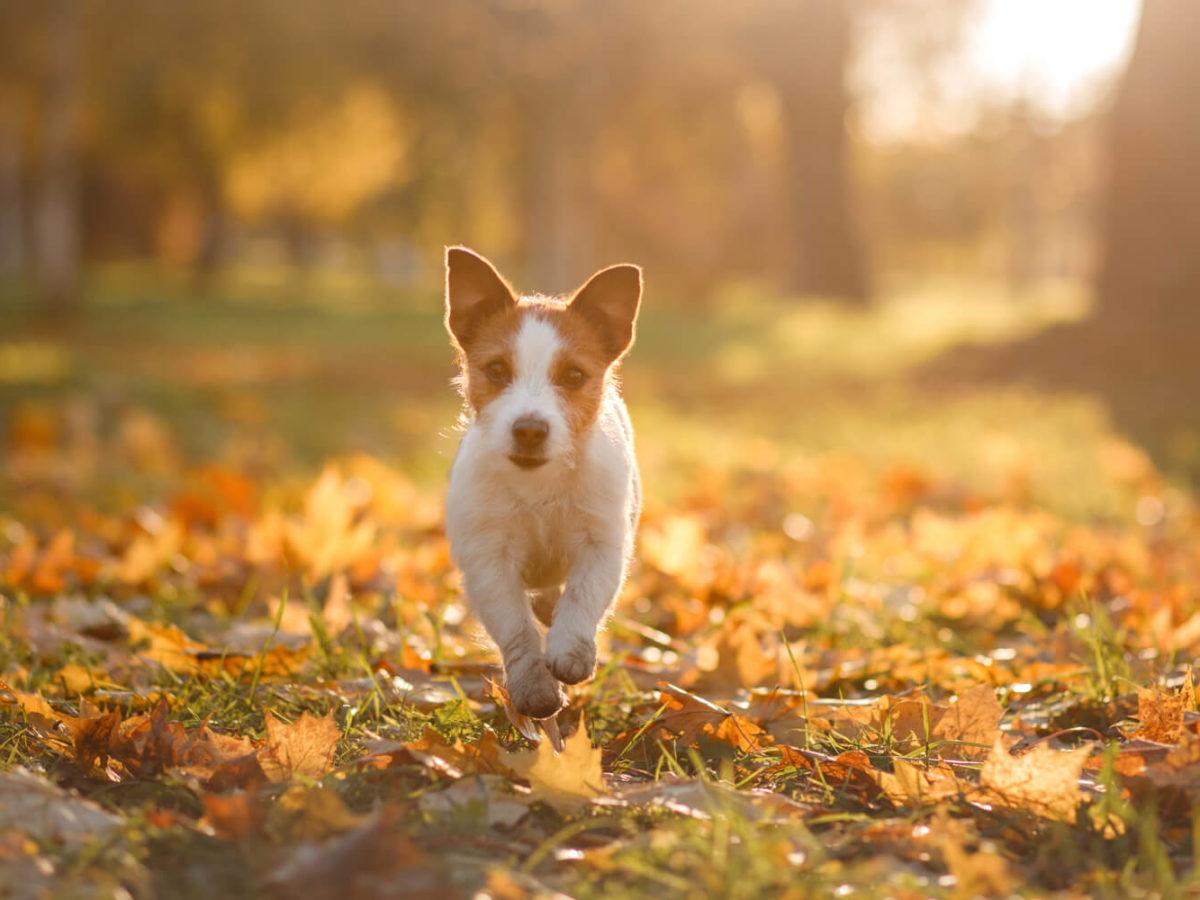 Autumn-Dog-Walks