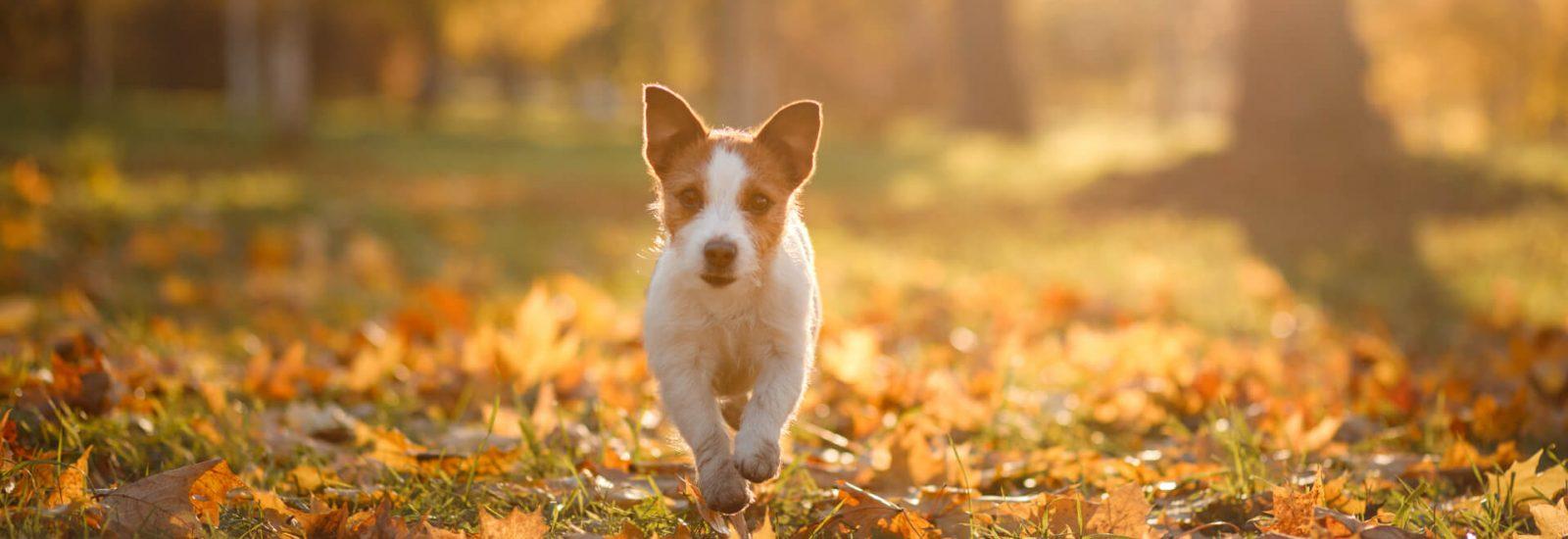Image of Best Autumn dog walks in Bristol