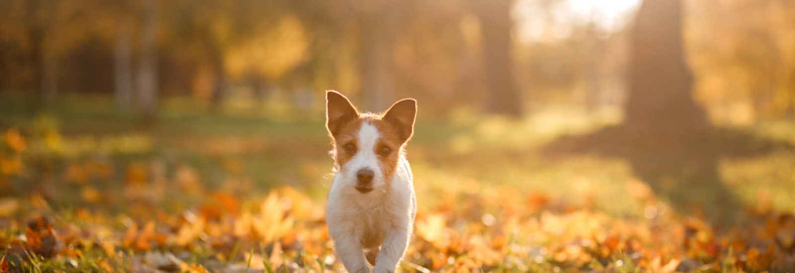 Image of Best Autumn dog walks in Bristol