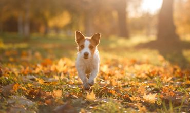 Image of https://bristol-barkers.co.uk/posts/best-autumn-dog-walks-bristol/
