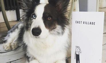 Image of https://bristol-barkers.co.uk/dog-friendly/east-village/