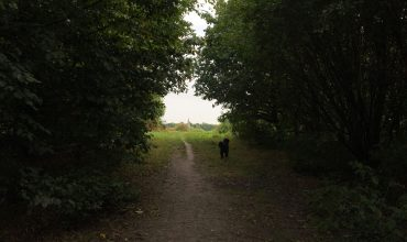 Image of https://bristol-barkers.co.uk/walks/warmley-forest-park/