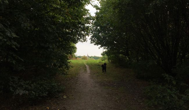 Image of Warmley Forest Park
