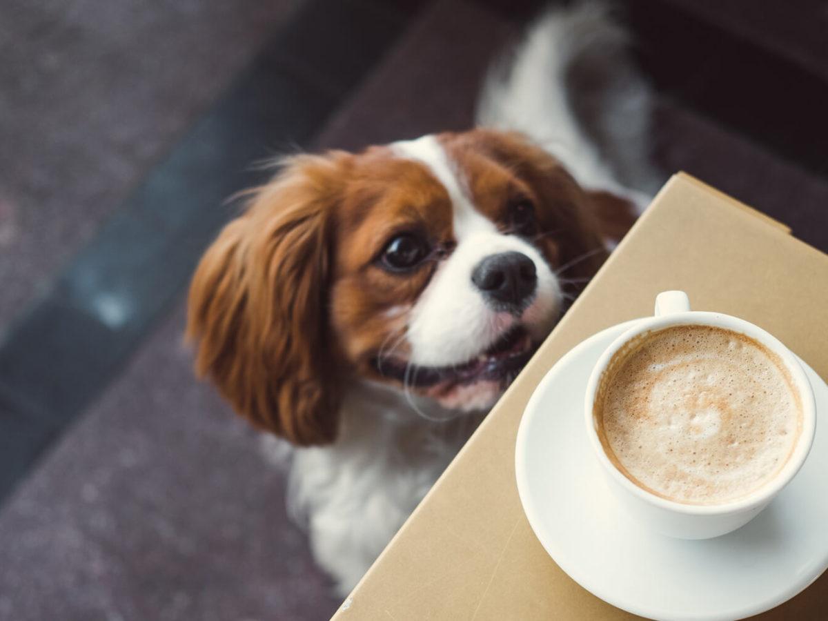 Dog-Coffee-Bristol