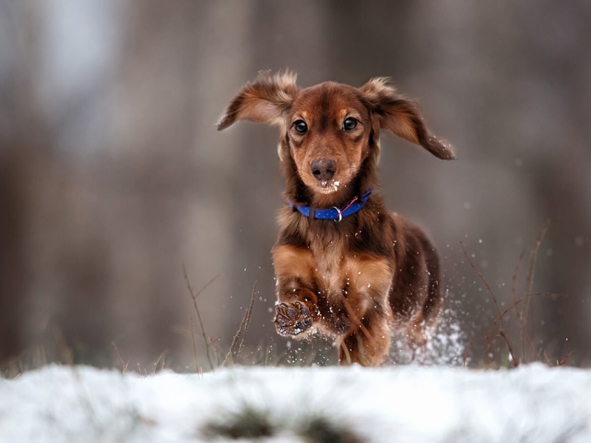 Winter2-Dog-Walks