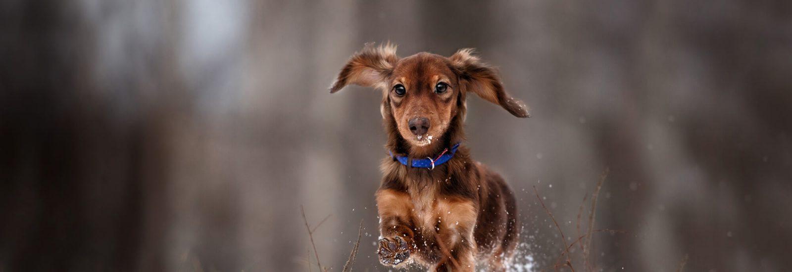 Image of Best Winter dog walks in Bristol