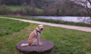 Image of https://bristol-barkers.co.uk/walks/woodchester-park/