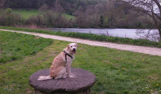 Image of National Trust Woodchester Park