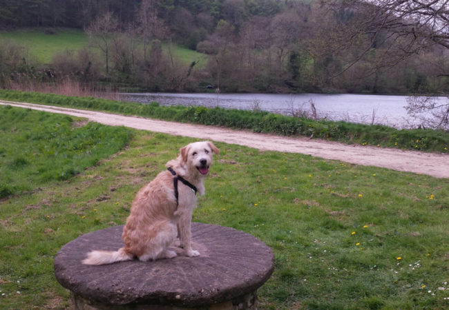 Image of Woodchester Park