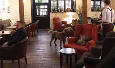Image of https://bristol-barkers.co.uk/dog-friendly/hotel-du-vin-bistro-city-centre/