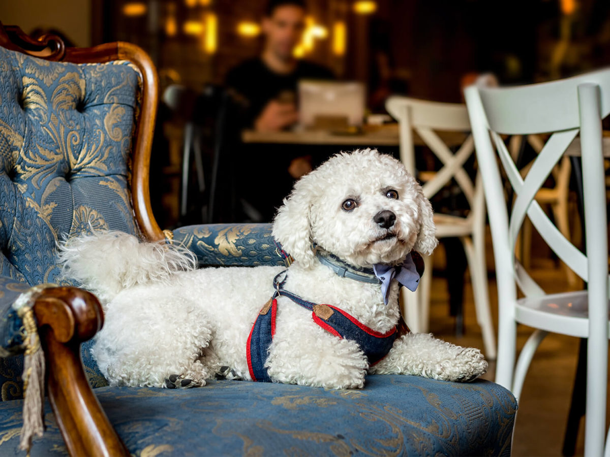 Dog-friendly-pubs-bristol