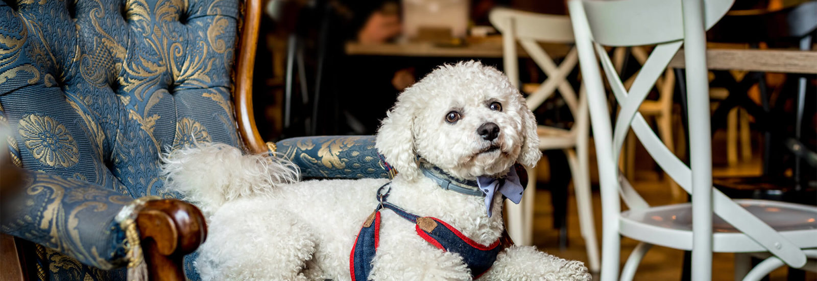Image of Dog friendly pubs in Bristol