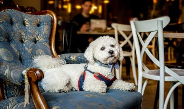Image of https://bristol-barkers.co.uk/posts/dog-friendly-pubs-in-bristol/