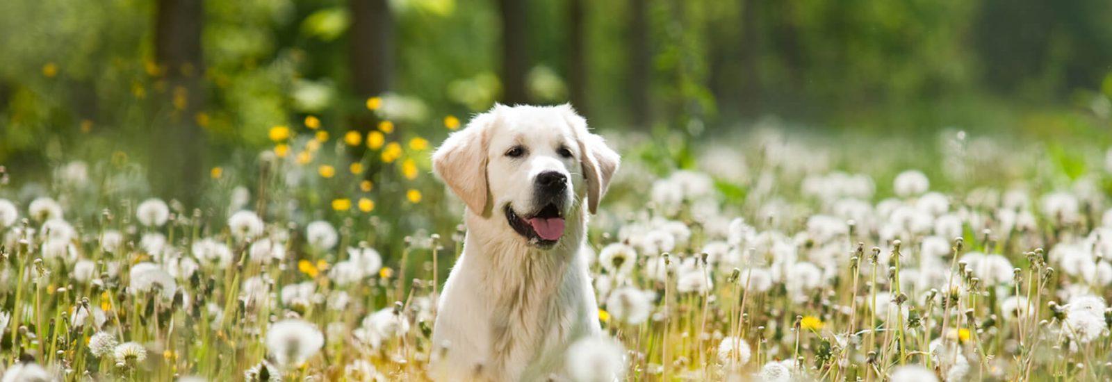 Image of Best Spring dog walks in Bristol