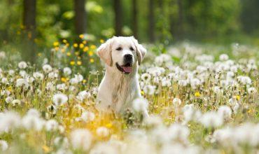 Image of https://bristol-barkers.co.uk/posts/best-spring-dog-walks-in-bristol/