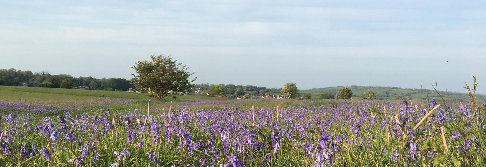 Image of Felton Common