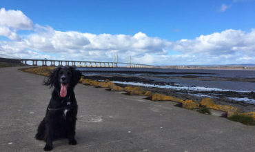 Image of https://bristol-barkers.co.uk/walks/severn-beach/