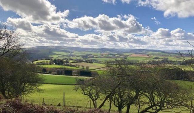 Image of Weacombe & Bicknoller Combe, Quantock Hills