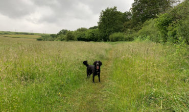 Image of https://bristol-barkers.co.uk/walks/frampton-cotterell-to-winterbourne-down/