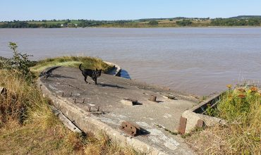 Image of https://bristol-barkers.co.uk/walks/purton-ships-graveyard/
