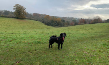 Image of https://bristol-barkers.co.uk/walks/frenchay-moor/