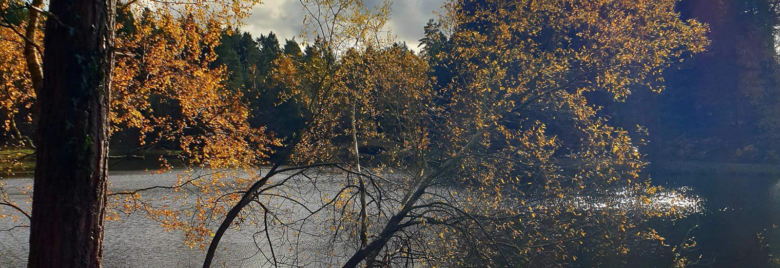Image of Mallards Pike Lake
