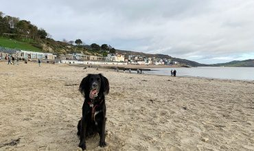 Image of https://bristol-barkers.co.uk/posts/dog-friendly-holiday-near-lyme-regis/