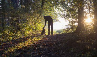 Image of https://bristol-barkers.co.uk/posts/quiet-walks-for-nervous-or-reactive-dogs-in-bristol/