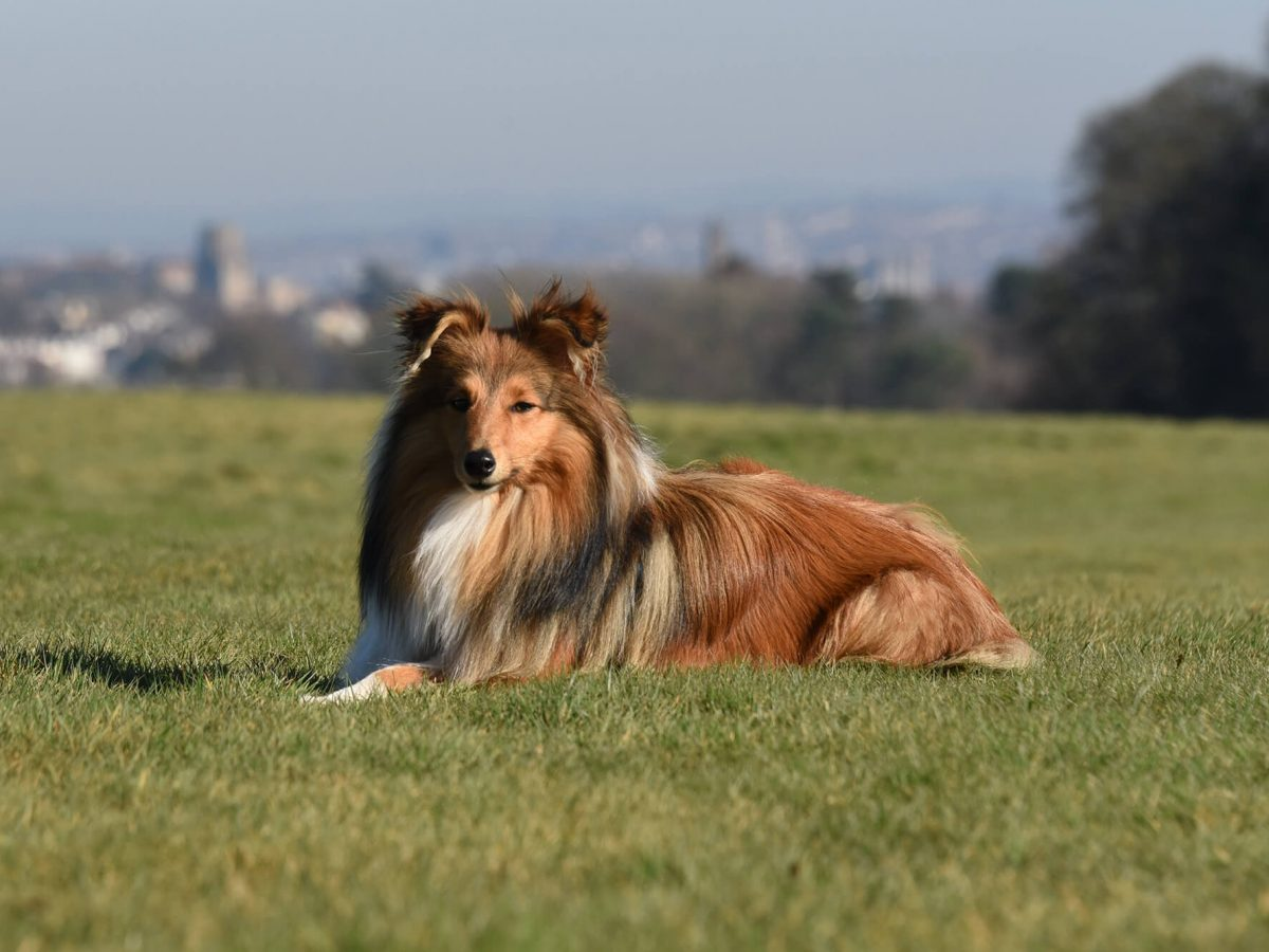 Ultimate Guide to dog friendly Bristol