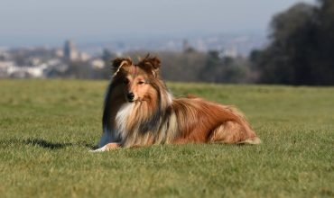 Image of https://bristol-barkers.co.uk/posts/the-ultimate-guide-to-dog-friendly-bristol/