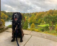 Image for National Trust Stourhead
