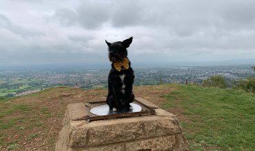 Image of https://bristol-barkers.co.uk/walks/leckhampton-hill-charlton-kings-common/